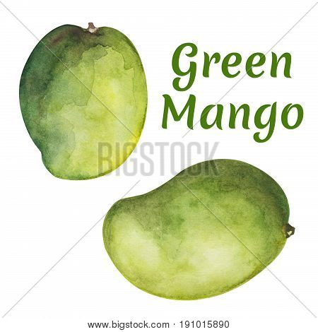 Green mango fruit on white background. Tropical fruit mango hand-painted clipart isolated. Fresh green exotic fruit. Mango tree fruit. Natural healthy food icon. Summer travel in Asia. Organic diet