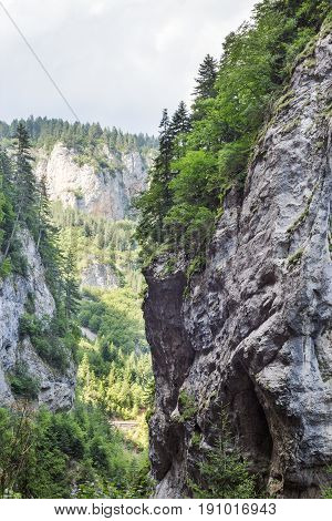 Gorge of the Rhodope Mountains abundantly overgrown with deciduous and evergreen forest at sunny summer day (Trigradskoto Zhdrelo Bulgaria)
