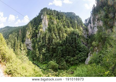 Mountain in the gorge of Rhodope Mountains abundantly overgrown with deciduous and evergreen forest in sunny summer day (Trigradskoto Zhdrelo Bulgaria)
