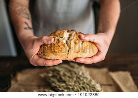 Baker hands breaks in half fresh baked bread loaf
