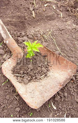 Green growth in the soil against the background of the field