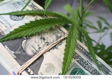 Marijuana With Money Close Up High Quality