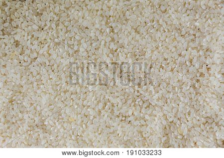 Stack of uncooked Japanese rice. Close up of Japanese rice concept for background and wallpaper. Japanese rice with macro concept for background and texture. Copy space of uncooked Japanese rice on table for background.