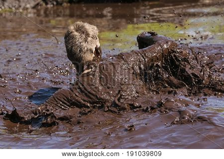 Mud race. Obstacle race runner in action