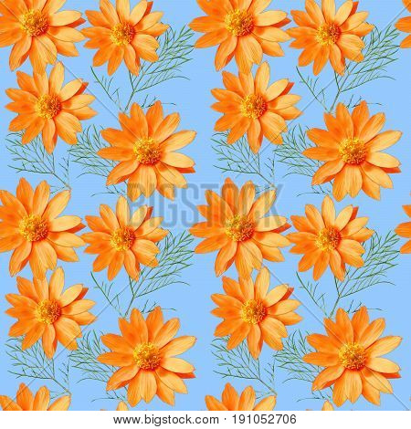 Adonis.Texture of flowers. Seamless pattern for continuous replicate. Floral background photo collage for production of textile cotton fabric. For use in wallpaper covers