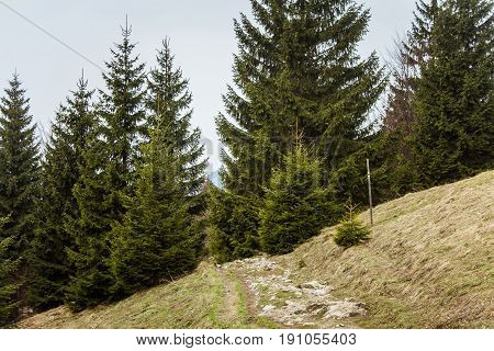 A Beautiful Mountain Forest Landscape. Mala Fatra Mountains In Slovakia