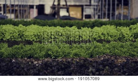 Cultivated farm country plantation organic