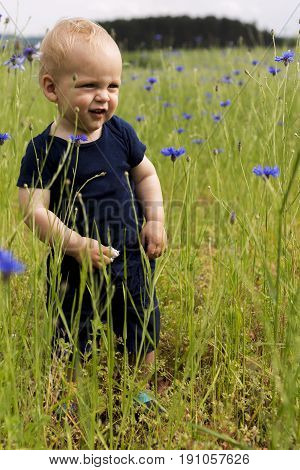 Cute Blond Baby Boy In The Field Of Cornflowers. Concept For Country Life