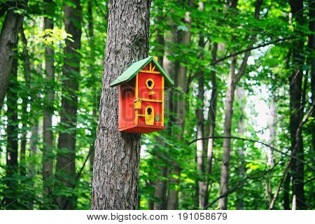 Red birdhouse on a tree in the forest