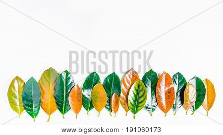 Forest Treeline Made Of Colorful Leaves On Bright Background. Minimal Nature Concept. Flat Lay.
