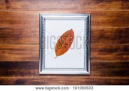 Orange leaf in picture frame on wooden floor background.