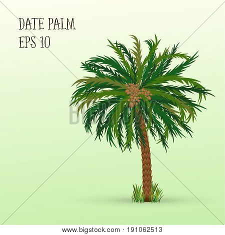 Date palm tree with ripe fruits dates. Raster illustration