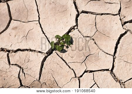 Dry ground shortages on tree texture background.