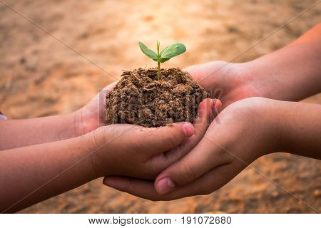 Children planting forests to reduce global warming Concept afforest.