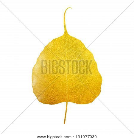 The Bodhi leaf golden isolated white background