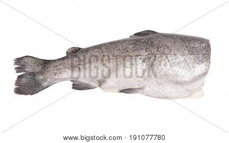 Gutted trout fish isolated on white background