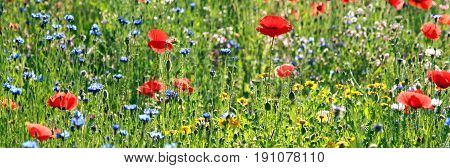 banner colorful meadow with wildflowers back lit