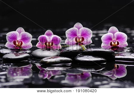 Beautiful orchid and therapy stones with reflection