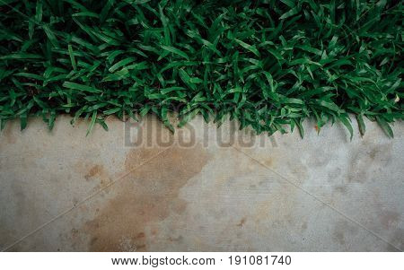 Green grass and concrete floor, suitable for background design.