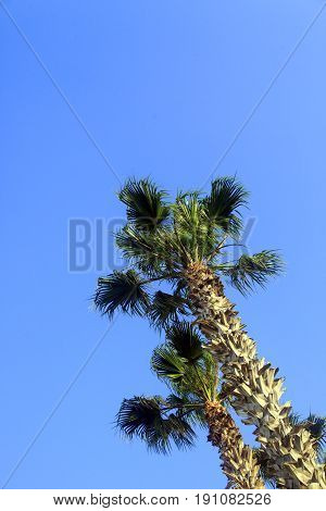 Tropical Palm trees on sky background .