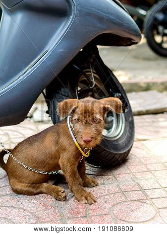 Cute dog puppy on the street near a front wheel of motorbike