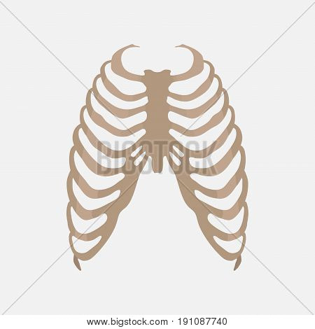 thorax human anatomy the study of the body medical icon label flat design vector image
