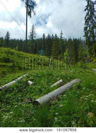 Beautful Hiking In Alpine Nature