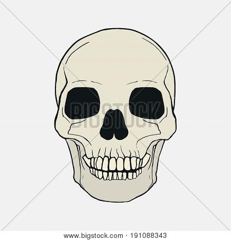 human skull human anatomy medical sticker vector image