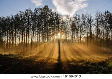Early Morning in East Flanders, Belgium. Light Rays are being cast though the trees.