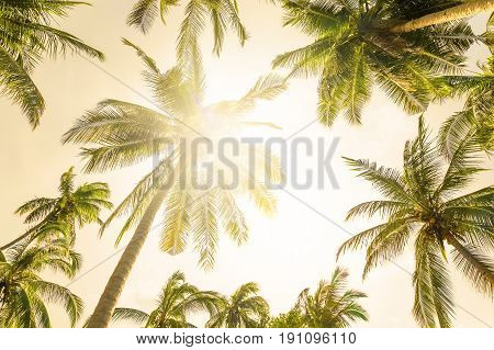 Coconut palm trees perspective view, summer background
