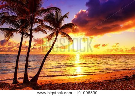 Coconut palm trees against colorful sunset background