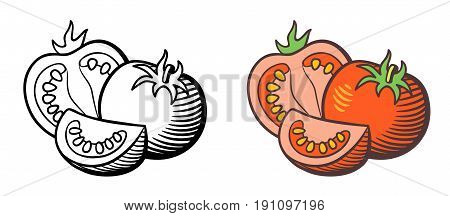 Stylized vector illustration of tomatoes. Fresh ripe tomato cross section with seeds and tomato slice. Outline and colored version isolated on white
