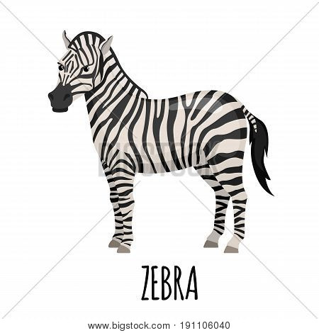 Cute Zebra in flat style isolated on white background. Cartoon zebra. Zoo animal. Vector illustration.
