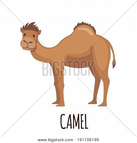Cute Camel in flat style isolated on white background. Cartoon african camel. Zoo animal. Vector illustration.