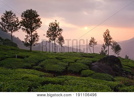 Sunset over tea plantations in Munnar, Kerala, South India