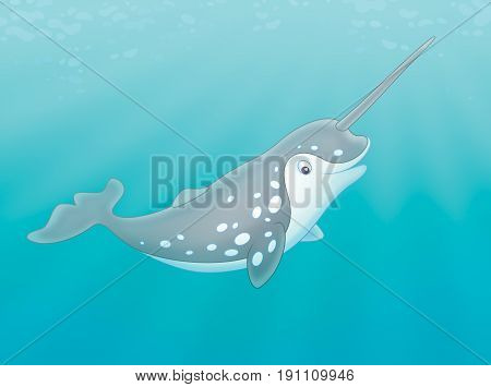 grey spotted narwhal with a long tusk swimming in a polar sea