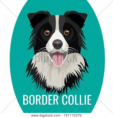 Border Collie pet portrait isolated on blue with name of purebred below vector illustration. Big domestic dog , favourite pet friend