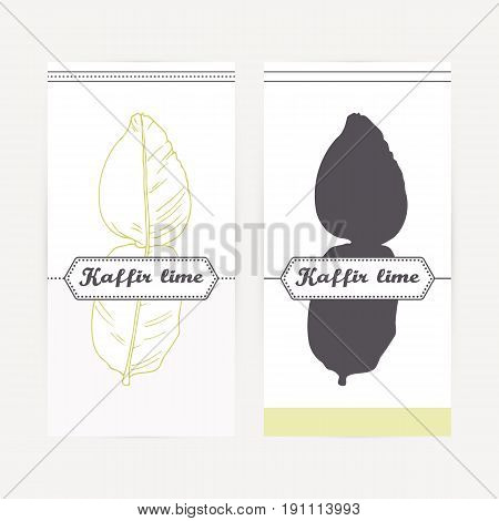 Kaffir lime seasoning. Hand drawn branch with leaves in outline and silhouette style. Spicy herbs retro labels collection for food packaging or kitchen design. Vector illustration