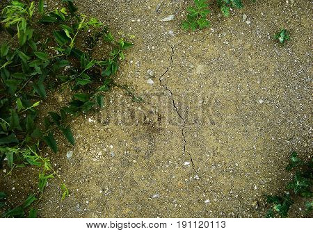 Soil, texture of the soil, green grass, nature background, ground