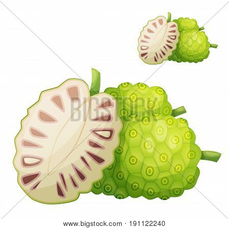 Noni fruit illustration. Cartoon vector icon isolated on white background. Series of food and ingredients for cooking.