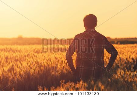 Farmer in ripe wheat field planning harvest activity female agronomist looking at sunset on the horizon