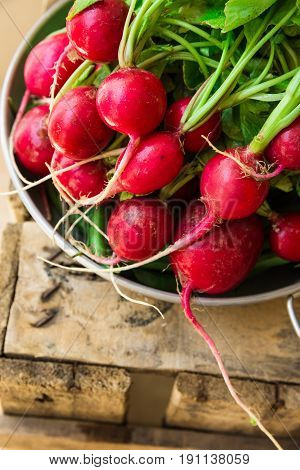 Bunch of fresh organic red radish with water drops in aluminum bowl on weathered wood garden box clean eating healthy diet vegetarian authentic style rural