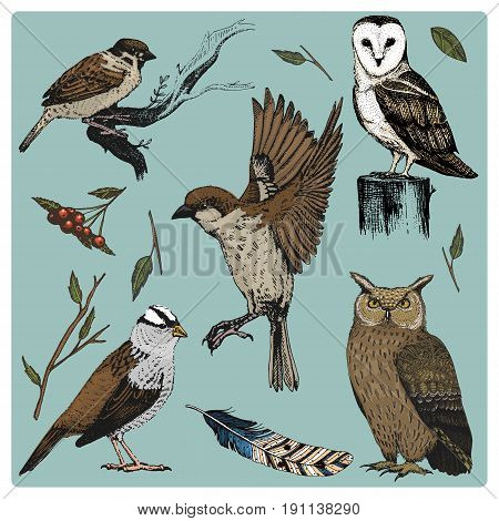 hand drawn vector realistic bird, sketch graphic style, set of domestic. turkey and duck. goose and red cardinal. dove and sparrow. raven and feather. typo alba, white owl, barn, long-eared