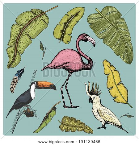 hand drawn vector realistic bird, sketch graphic style, set of domestic. cockatoo parrot, toco toucan and flamingo
