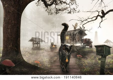 A magic cat living in a fairy-tale house in the marshes