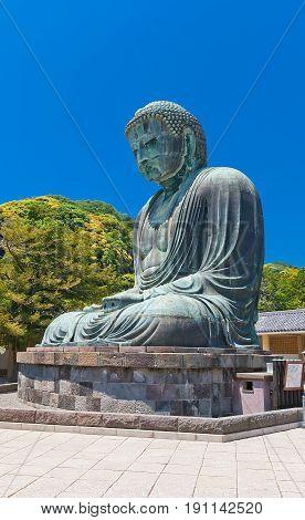 KAMAKURA JAPAN - MAY 19 2017: Great Buddha statue (Daibutsu circa 1252) of Kotoku-in temple in Kamakura. National Treasure of Japan