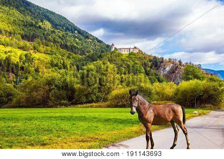 A sleek, slender horse in Val de Funes, Dolomites. valley in Tirol