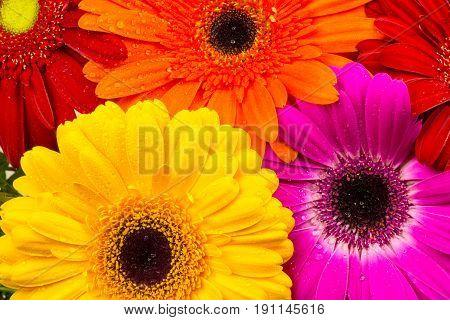 Bouquet Of Gerber