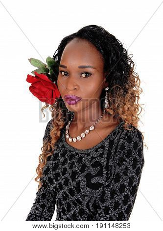 A beautiful African American woman in a closeup image with a red rose in her hair isolated for white background.