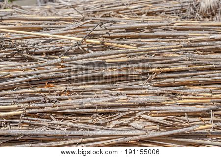 natural abstract striped background, texture of the dry reeds, dry grass, dried stalks
